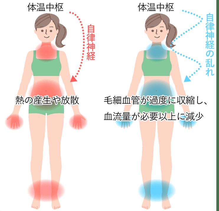 体温中枢→自律神経→熱の産生や放散 体温中枢→自律神経の乱れ→毛細血管が過度に収縮し、血流量が必要以上に減少